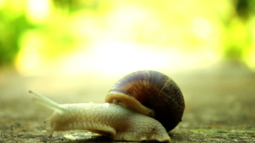 Beautiful Snail With Mucus In Shell Crawling In Nature