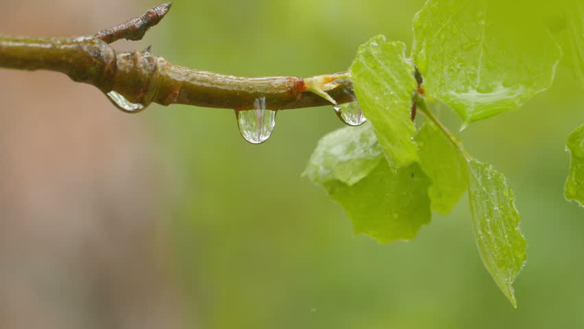 droplets on leaves 4k - photo #43