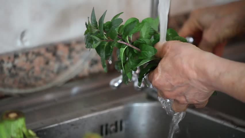 Video clip of woman washing fresh mint before to use it for cooking.