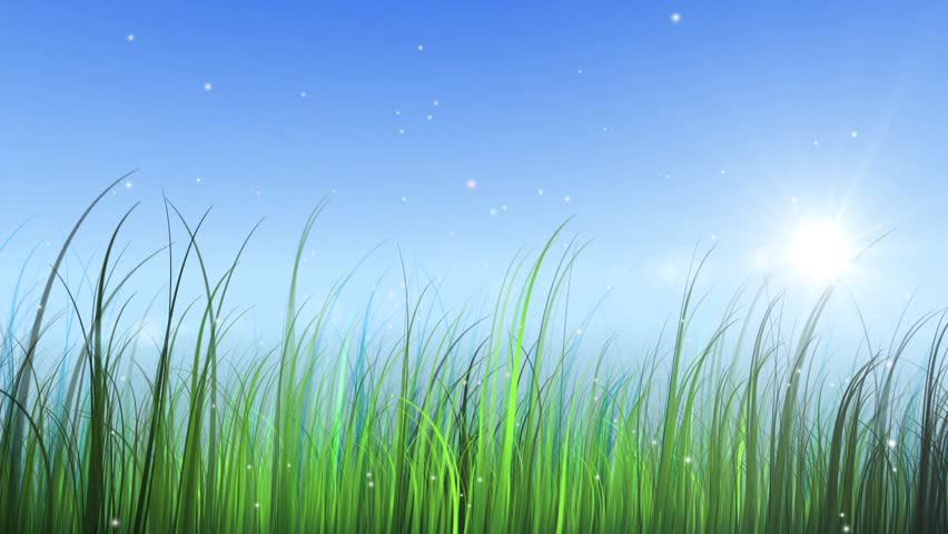 moving grass with sky and sun - HD stock footage clip