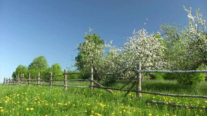 Countryside landscape. Apple-tree  garden with  wooden fence  - HD stock footage clip