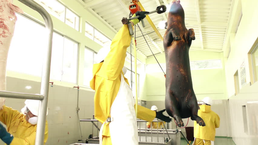 Butchers team at work inside of a slaughterhouse with animals carcasses hanging by the rails
