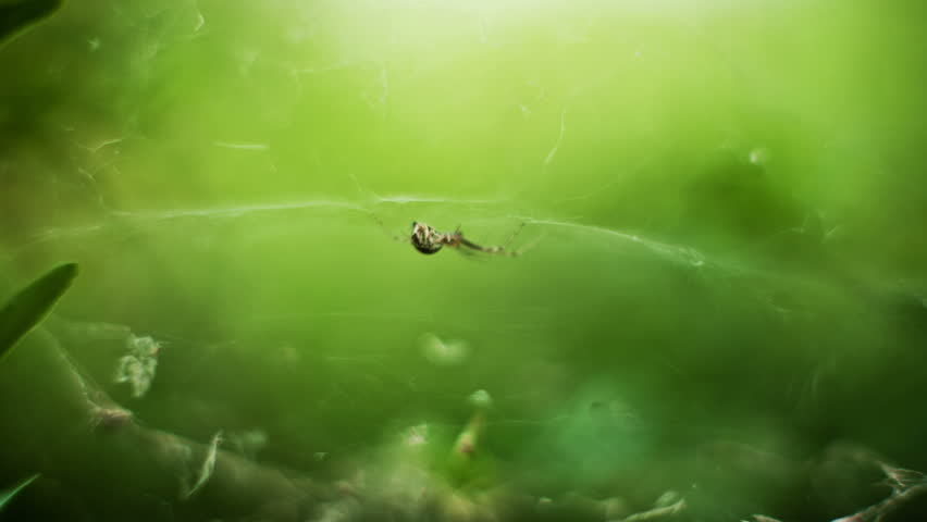 spider in his web waiting for his victim macro time lapse HD video