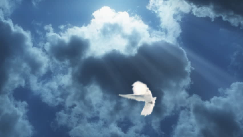 Composition with dove in the cloudy sky.