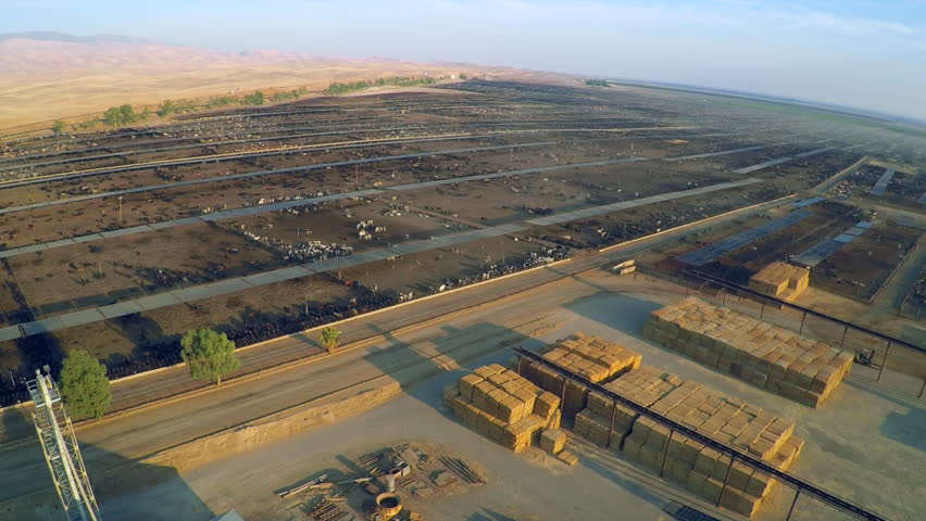 CALIFORNIA - CIRCA 2015 - Aerial over a vast cattle slaughterhouse in Central California.