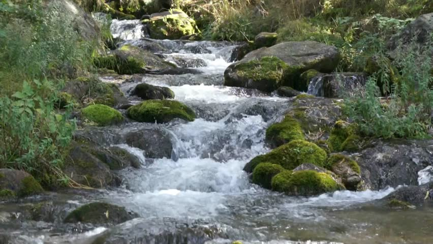 Forest stream running over mossy rocks  - HD stock video clip