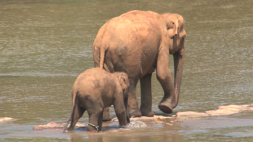 Baby elephant and mother in water
