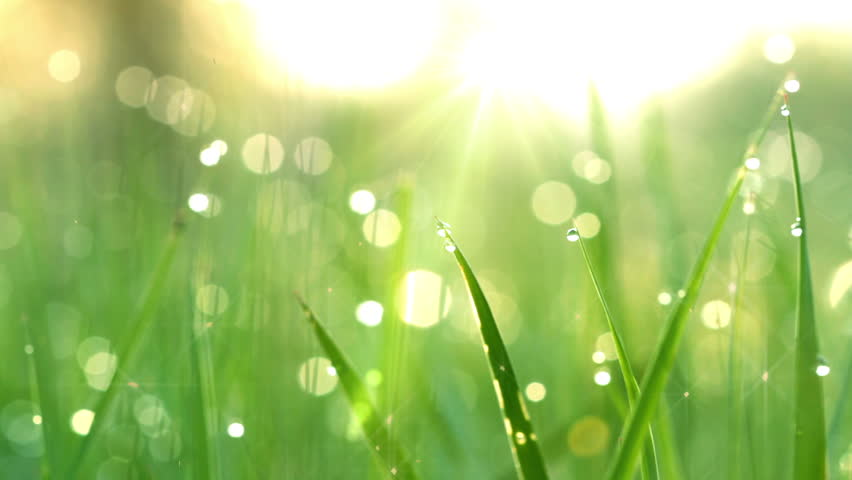 Blurred grass background with water drops. HD shot with motorized slider.  - HD stock video clip