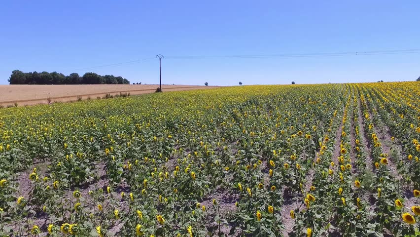 Europe, France, Aquitaine, Charente Maritime, Meschers sur Gironde, Campagne