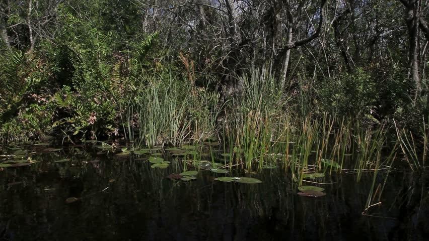 Everglades National Park: Wildlife in Wetland - Journey to ...  |Everglades National Park Ecosystem