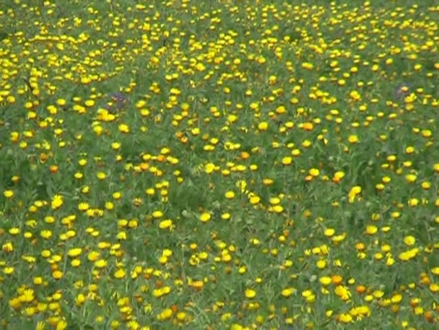 spring grassland - SD stock footage clip