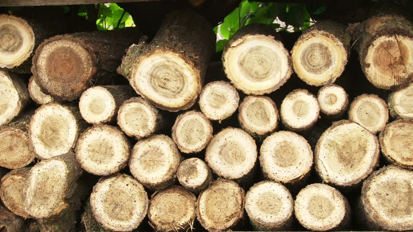 Multiple clips of fresh cut wood in pile.