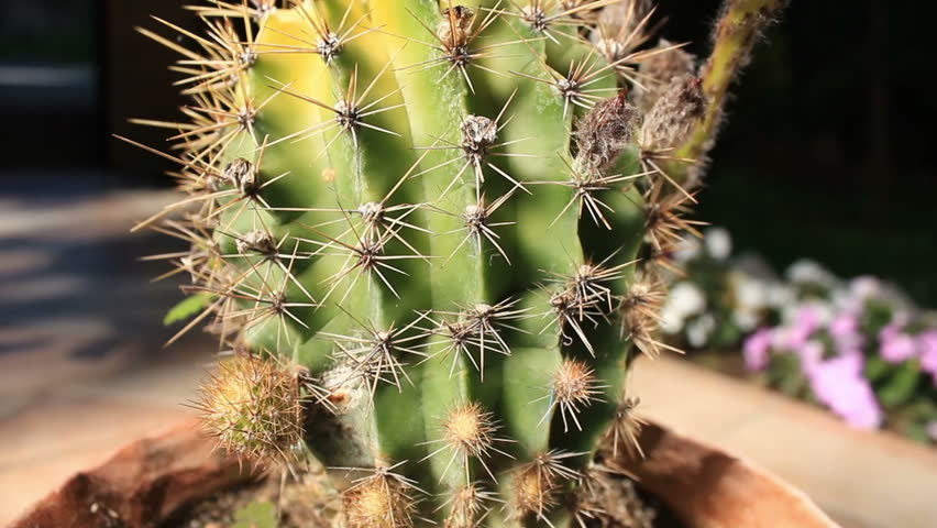 Cactus outdoor camera movement
