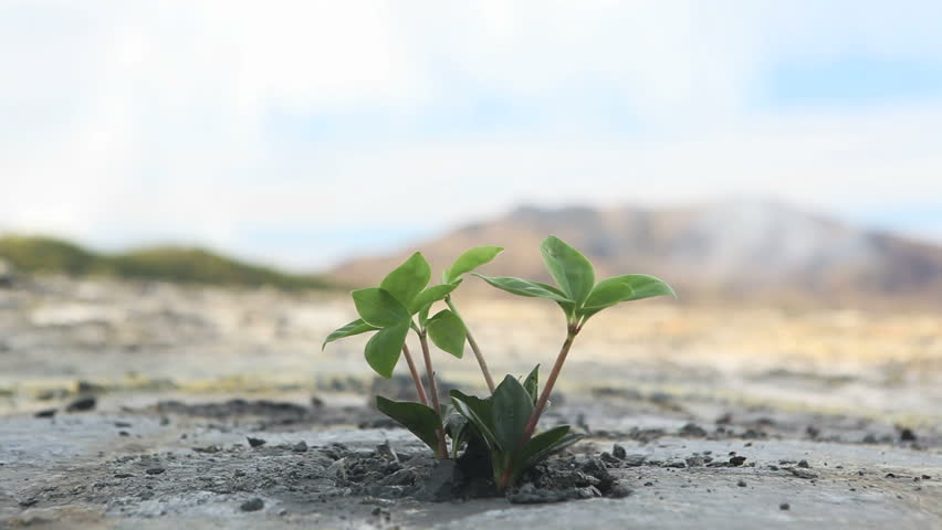 Ecology concept: a new sprout in the dry land