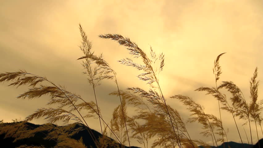 Autumn dry grass with sunset sky on the background.