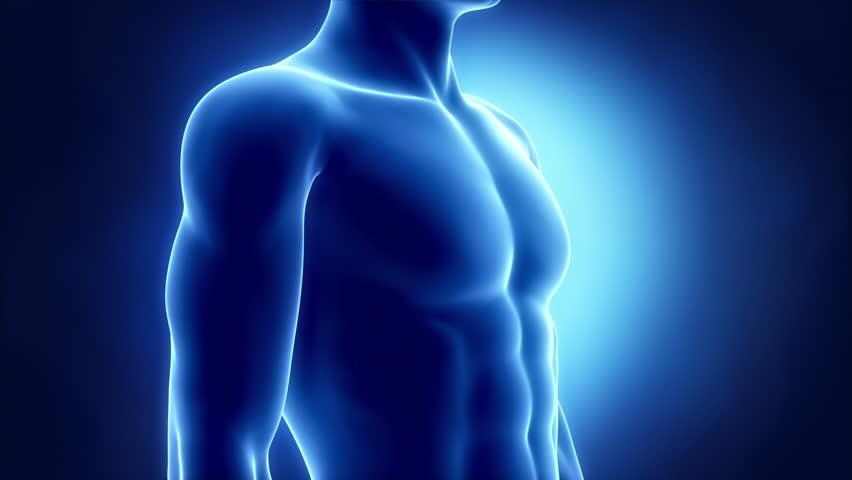 Human heart x-ray look in loop