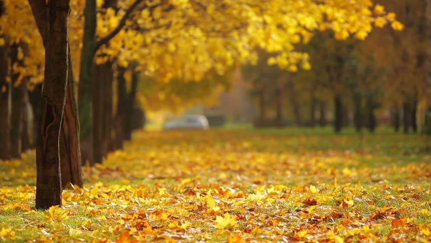 autumn city park