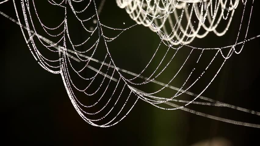 Cobweb closeup, beautiful spider's web
