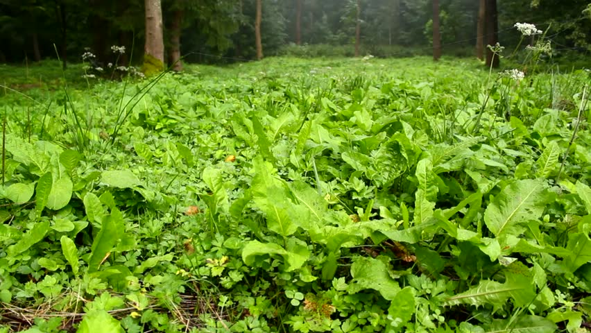 Green Forest Floor Plants Stock Footage Video 2918458