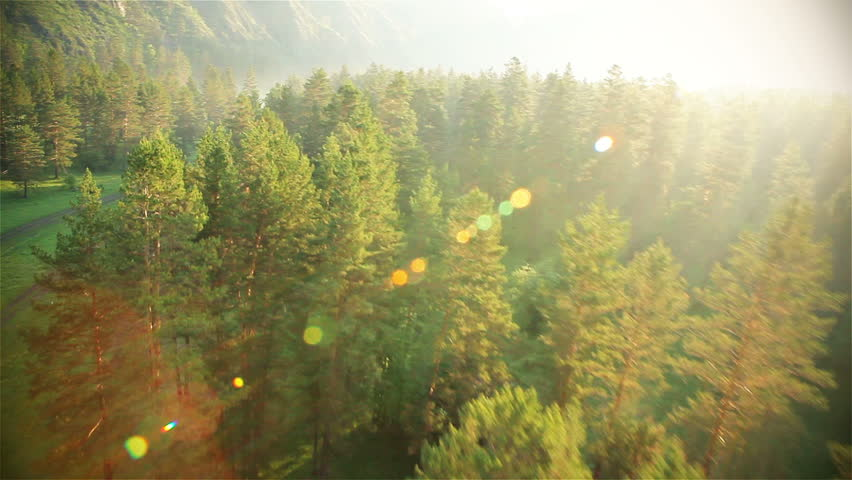 mountain forest HD