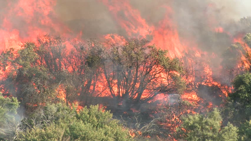 Wildfire Flames, Forest Fully Engulfed by Fire 1
