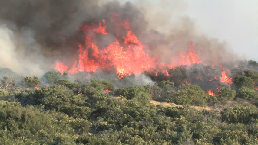 Wildfire Flames, Forest Fully Engulfed by Fire 4