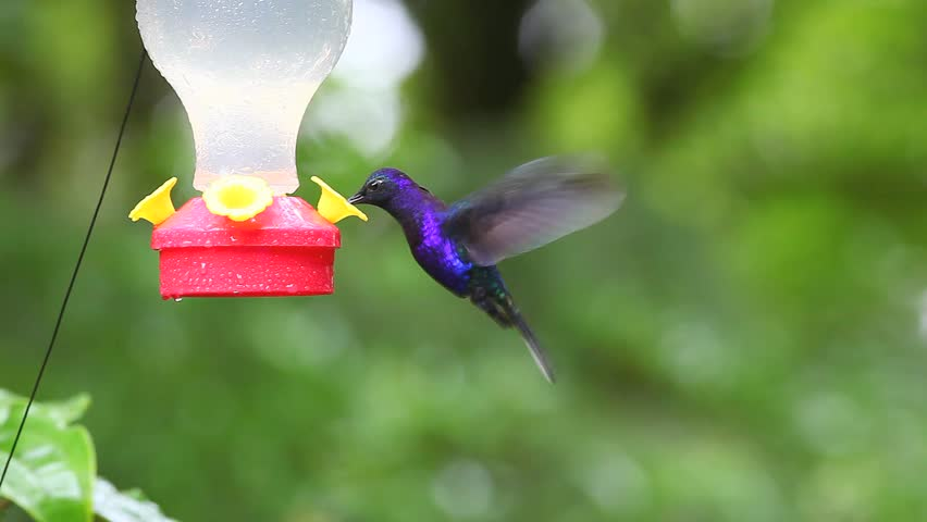 Colorful hummingbirds flying - photo#45