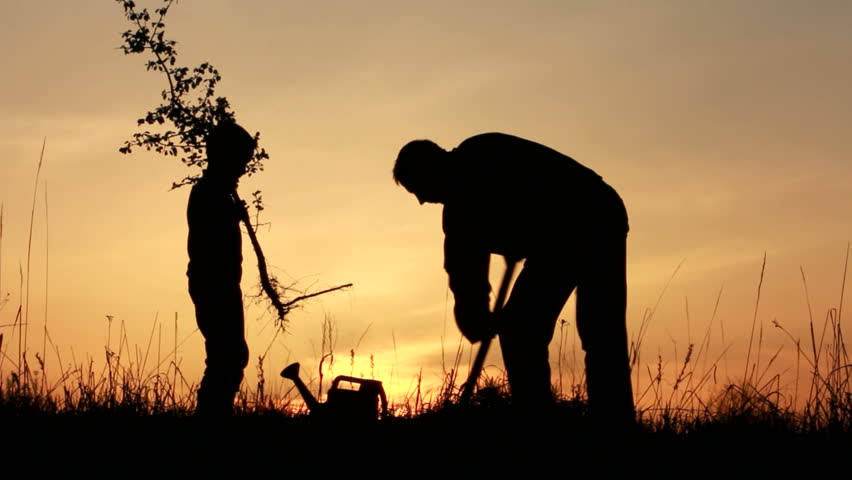 Father and son planting a tree. Sunrise. Silhouette. Spring. - HD stock video clip