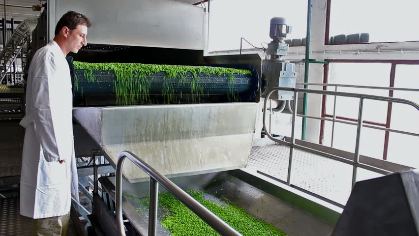 Worker in the food industry ; worker controls the production and processing of raw peas in the food industry,video clip - HD stock footage clip