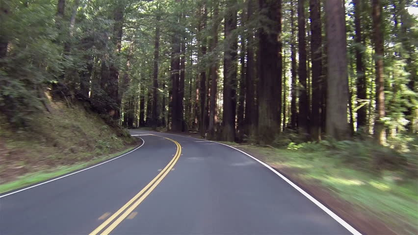 Vacation drive through redwood forest California. Vacation travel in vehicles along scenic byway and roads. Redwood National and State parks with old growth trees and new growth. - HD stock footage clip