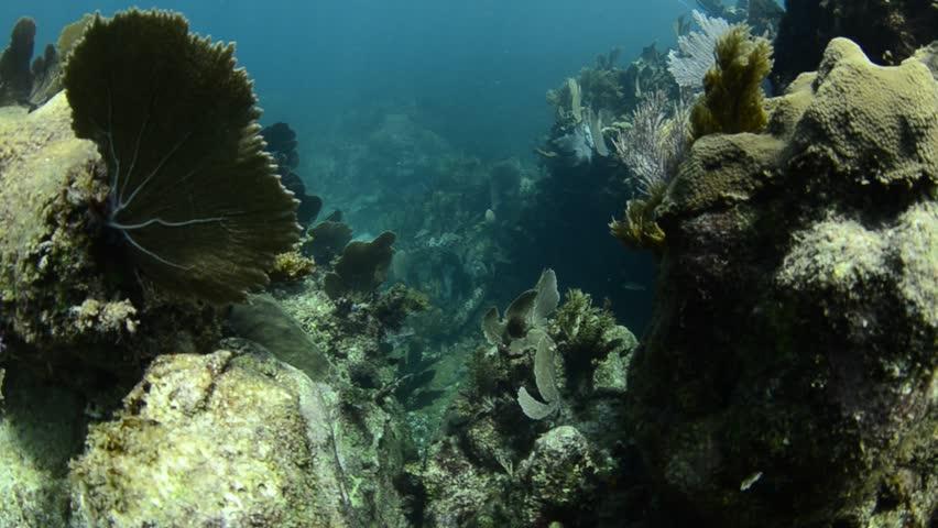 Scenics from caribbean reefs - HD stock video clip