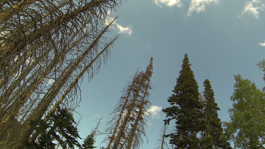 Mountain forest clouds beetle killed pine fast time lapse. Wasatch Mountain range in central Utah being attached by the Mountain Pine Beetle destroying thousands of acres of forest. - HD stock footage clip