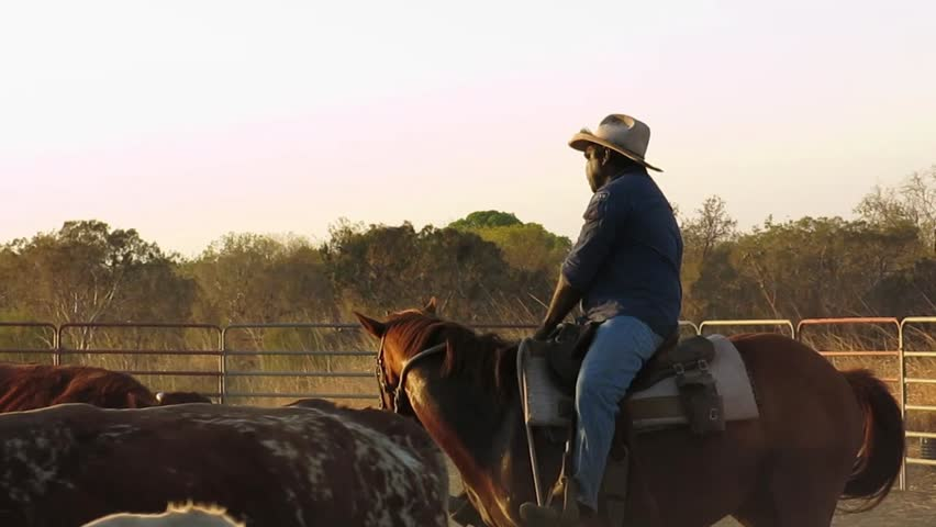 HOME VALLEY STATION, KIMBERLEY- September 5: mustering cattle, in the late afternoon, into stock yards at Home Valley Station, on September 5, 2013, Kimberley region, Western Australia, Australia.