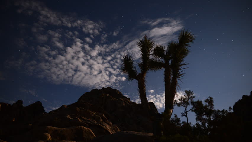 Astrophotography Time Lapse -Joshua Tree under Moonlight-