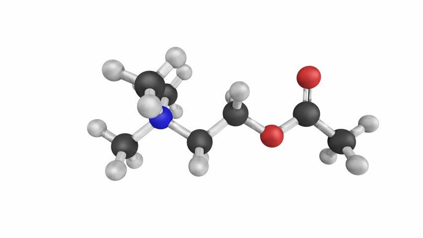 Header of acetylcholine