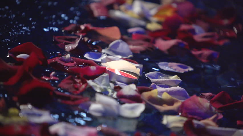 Background of water with flower petals. Super slow motion.