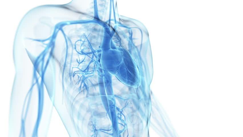 healthy beating heart