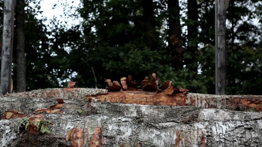 logging trees