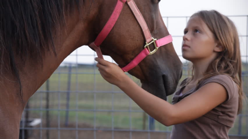 A young girl gently brushing and petting her horse. - HD stock footage clip