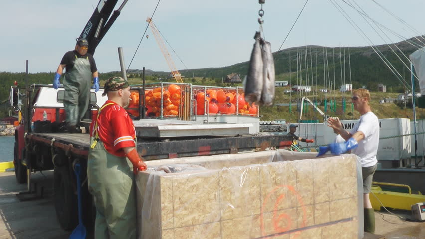 "BAY BULLS, NEWFOUNDLAND - SEPTEMBER 2010: Crew of the fishing boat Hannah Boden unload a catch of swordfish, this boat was featured on the Discovery t.v. show ""Swords Life On The Line""."