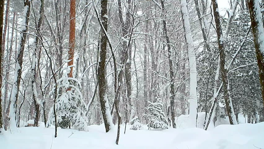 Falling snow in a winter forest with snow covered trees. Seamless looping.