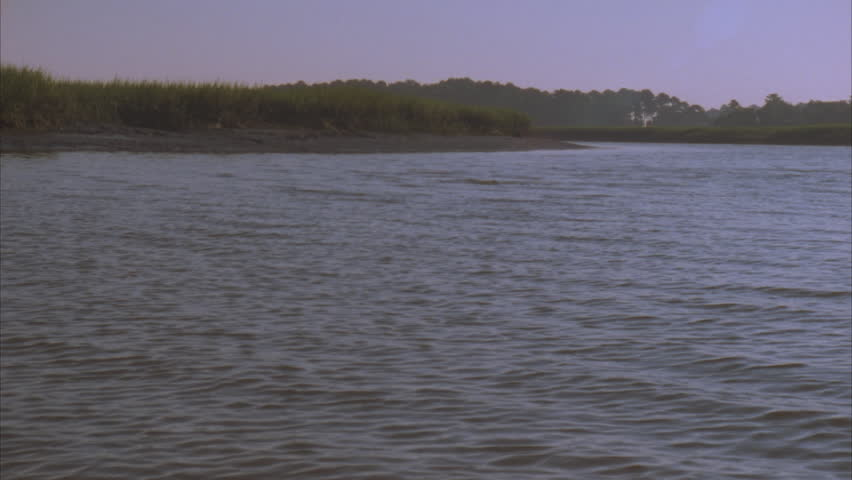 wide river estuary, bottle nosed dolphin swimming in distance