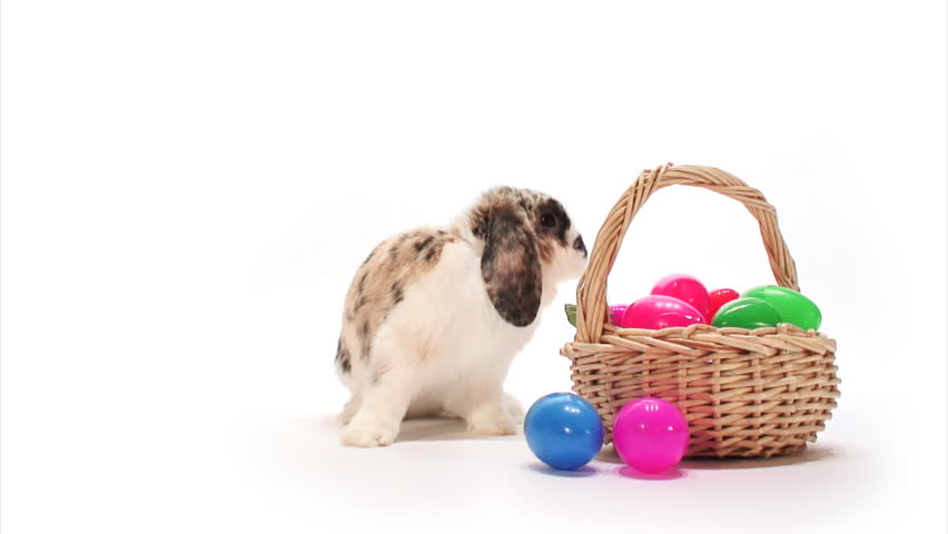 Bunny: Rabbit Sniffs Easter Eggs and Hops Off - HD stock footage clip