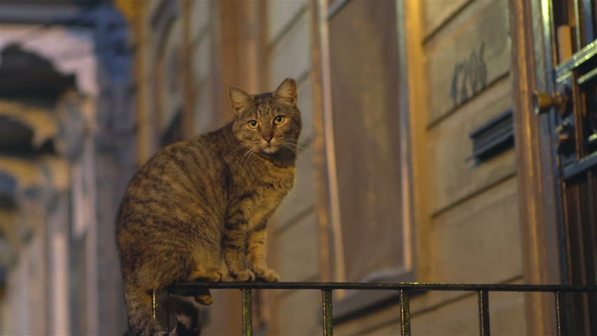Cat sitting on front porch railing at night