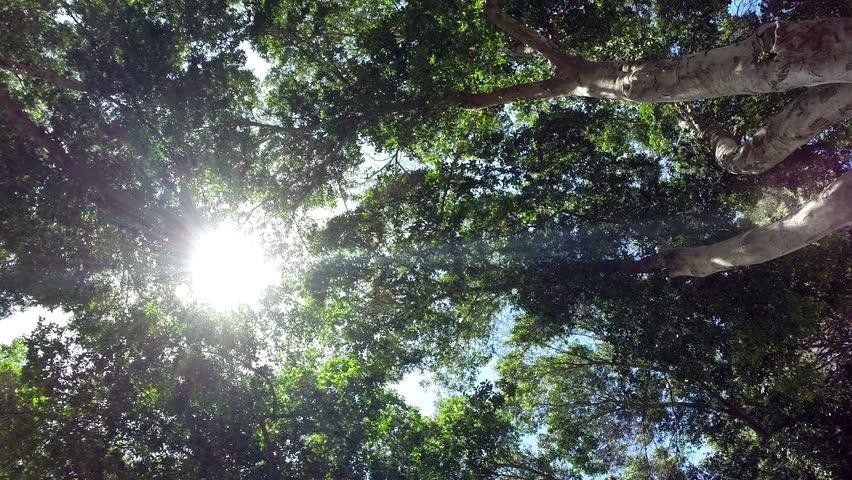 Sun Glimmering through Ferns