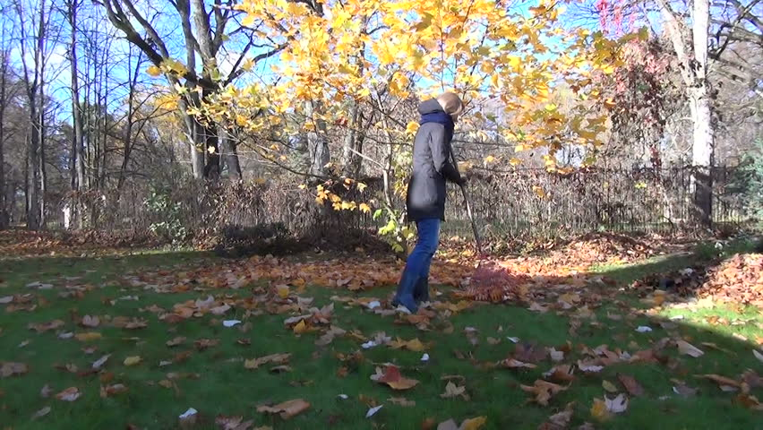 student raking with a rake bright autumn leaves in grandmother garden