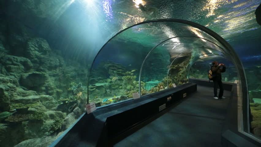 Adler Russia  city photos : SOCHI, ADLER, RUSSIA MAR 12, 2014: Sochi Discovery World Aquarium ...