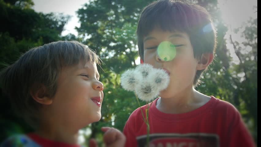 Two boys laughing being silly blowing dandelions, slow motion video clip - HD stock video clip