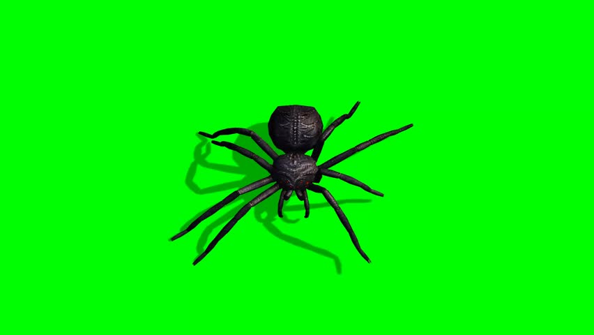 Spider walks - green screen - HD stock footage clip