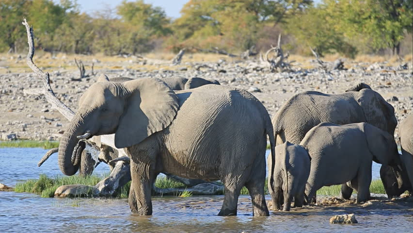 Mom and baby elephants getting out of waterhole in Etosha